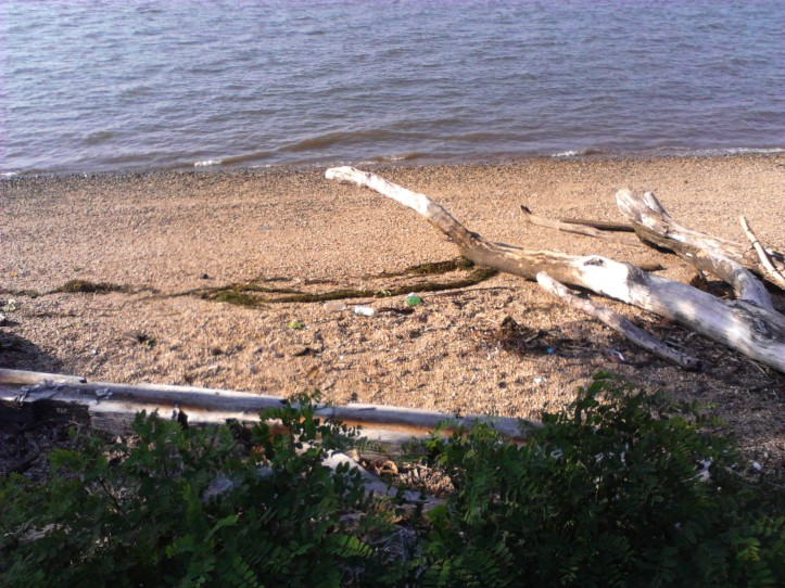 Trash on the shores of the Delaware River